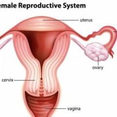 Fallopian Tube and Infertility